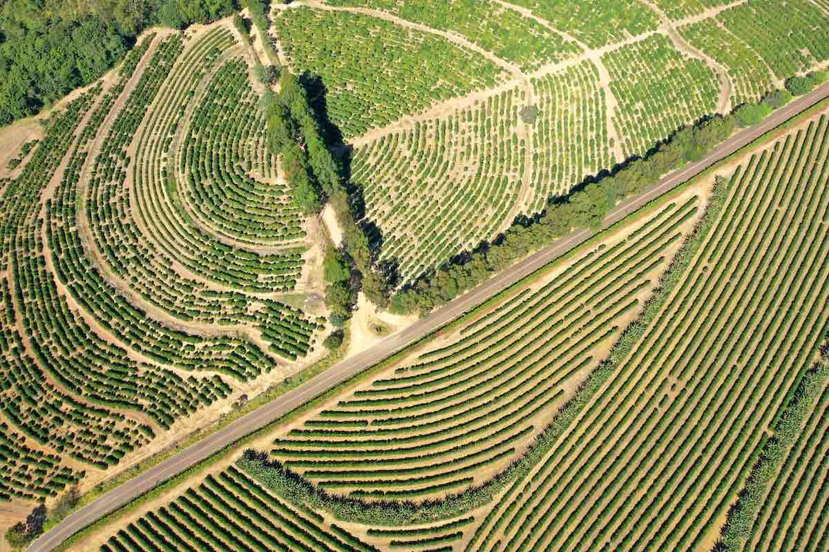 Fotografia de campo com plantações.